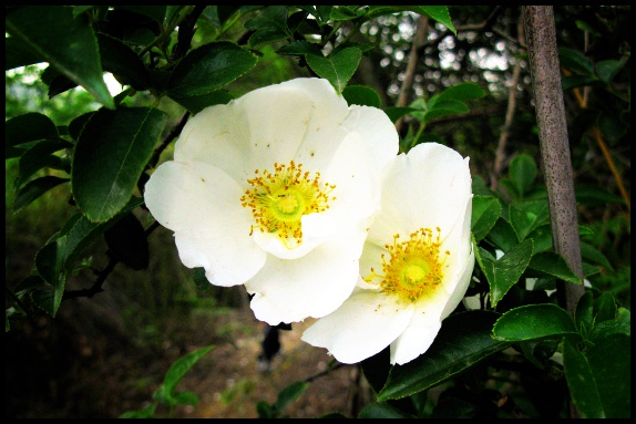 路上的小白花